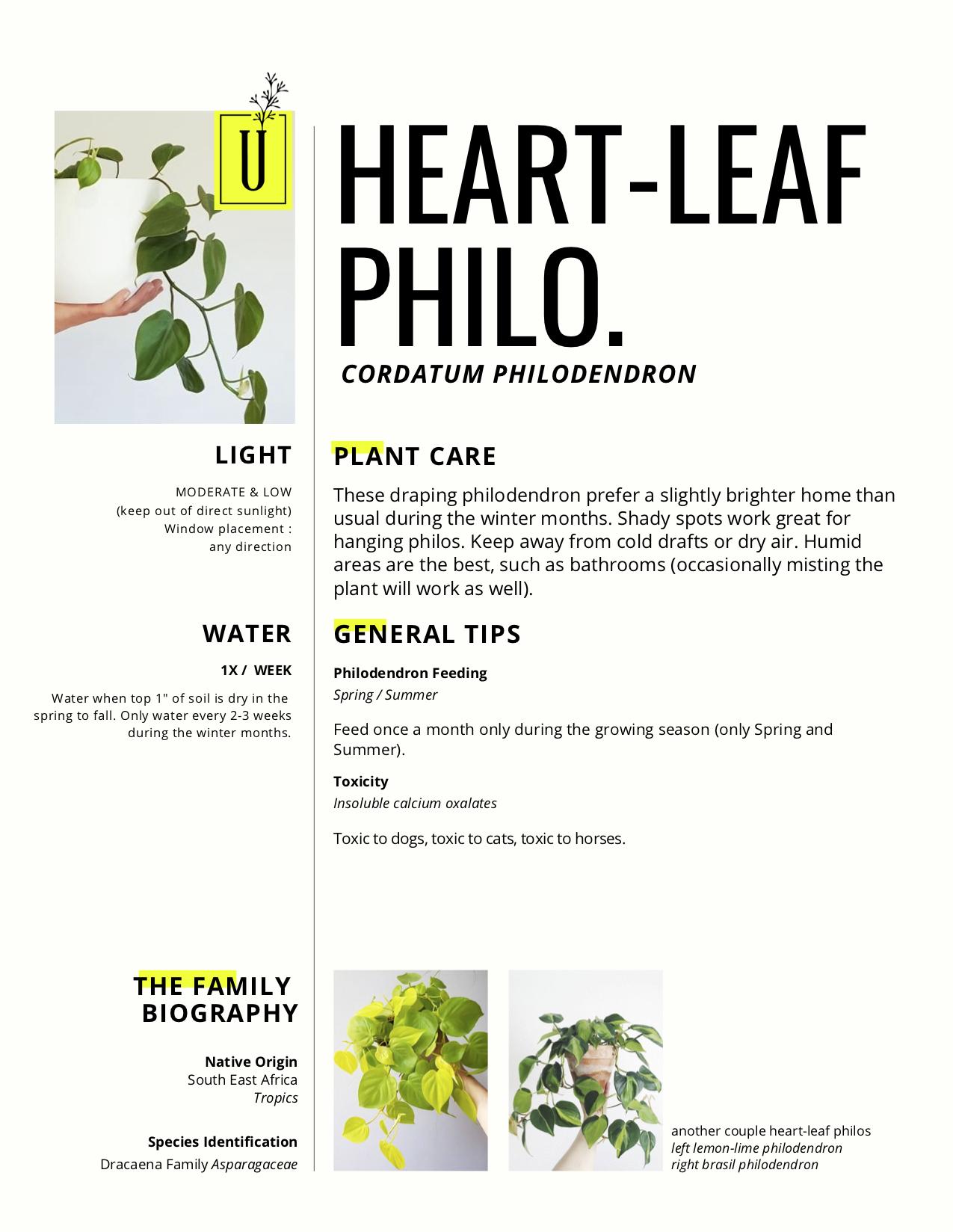 heart-leaf.jpg