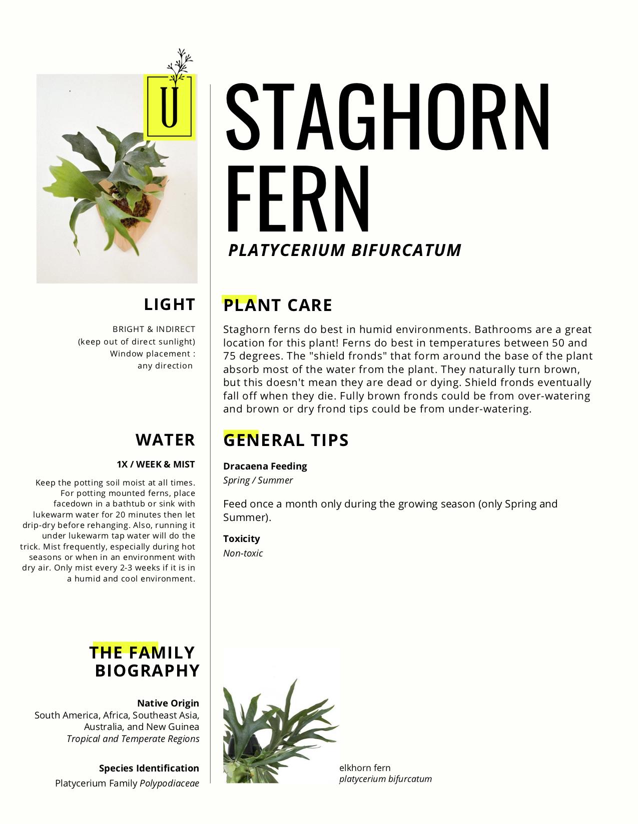 staghorn.jpg