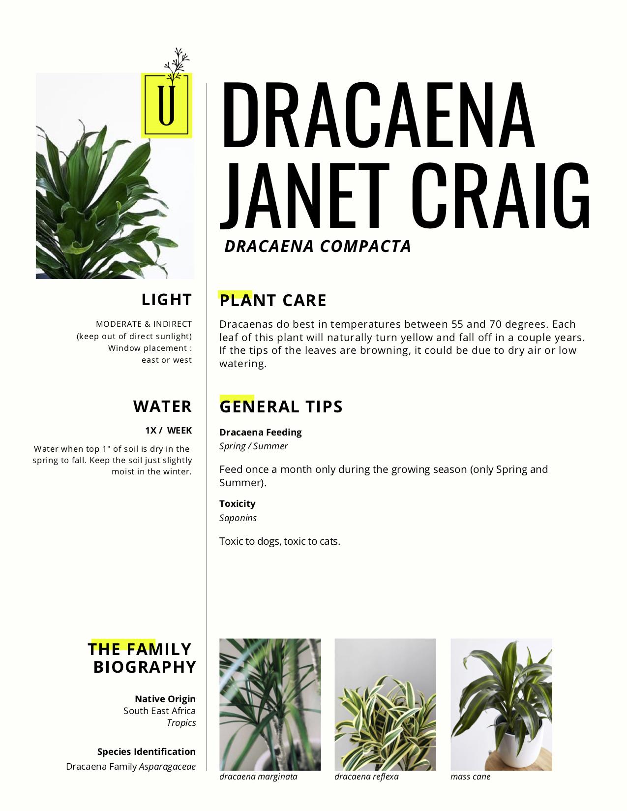 dracaena.jpg