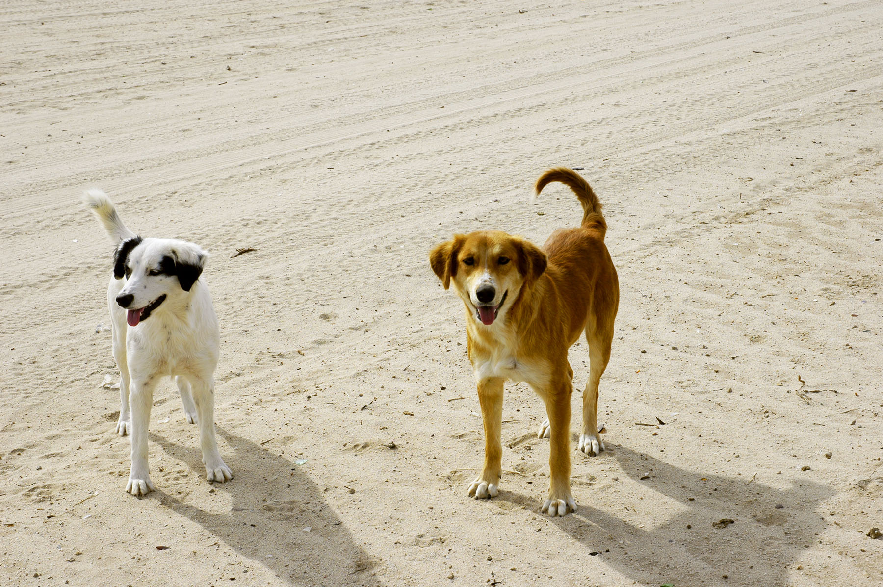 mexic0-dogs.jpg