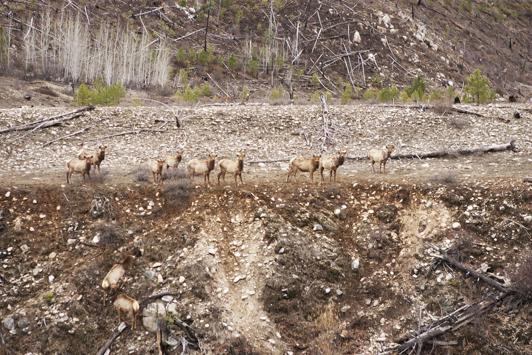 Utah-deer.jpg