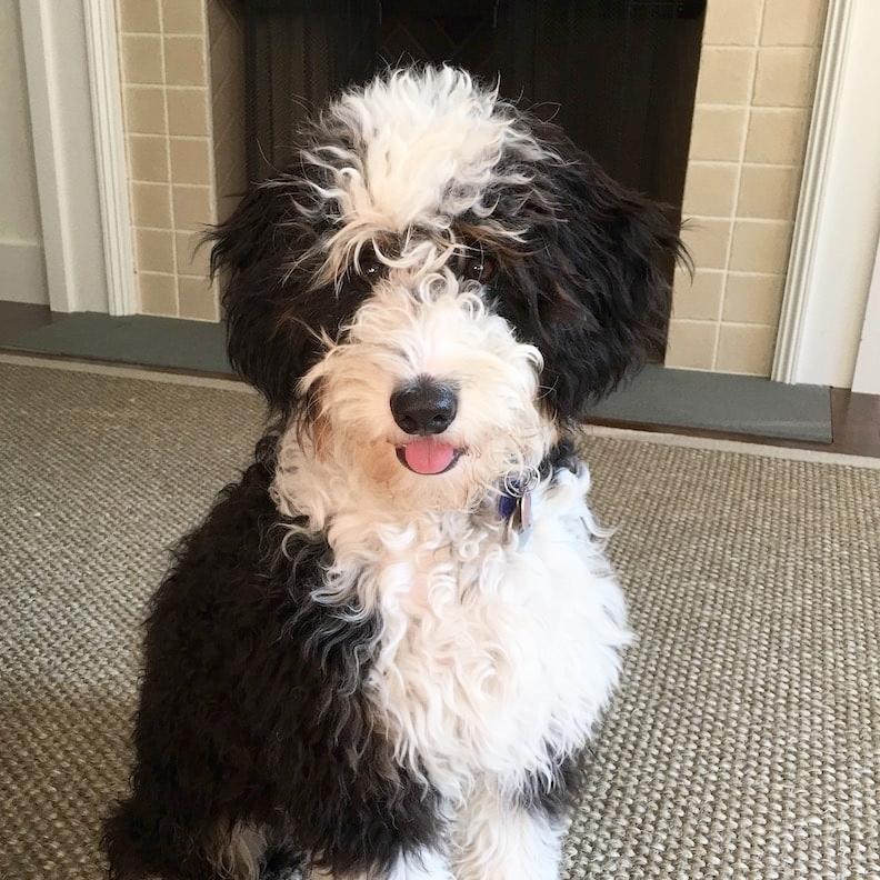best-puppy-trainer-in-nyc