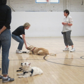 nyc-dog-obedience-class