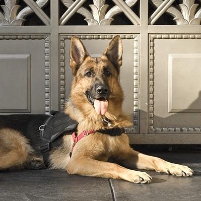 NYC-rally-class-dog-training