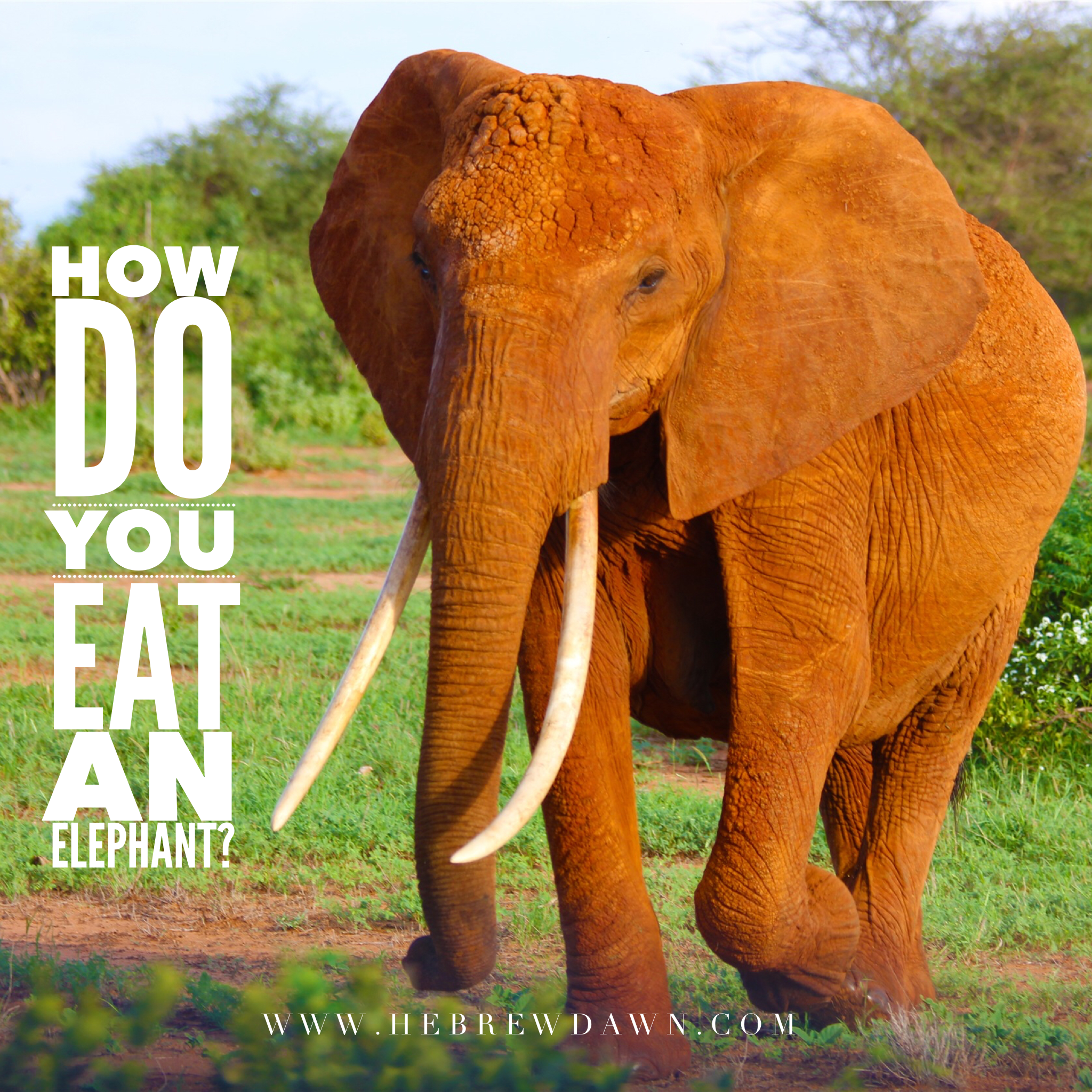 HebrewDawn: How do you eat an elephant? Bite, by bite.