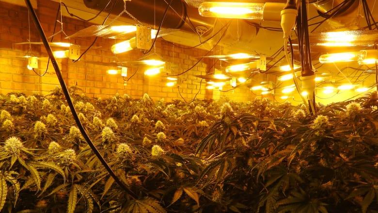 grow house 2.jpeg