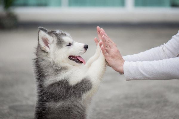 Canny dog puppy training in sebastopol
