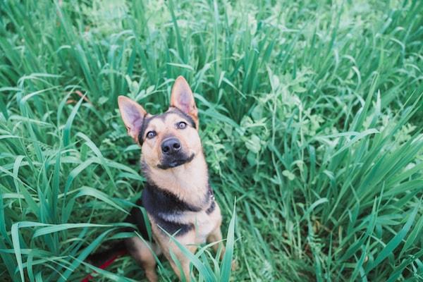 dog hiking in sebastopol