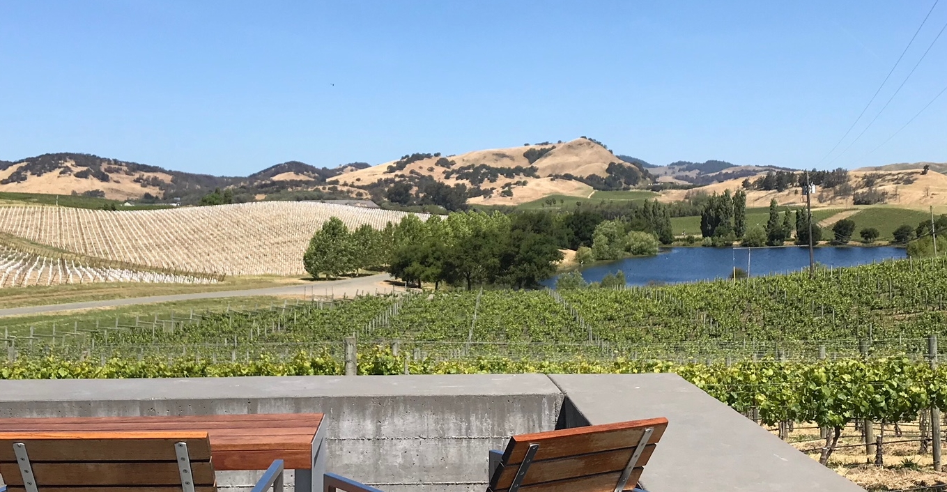 Come paint with me at Cuvaison Winery