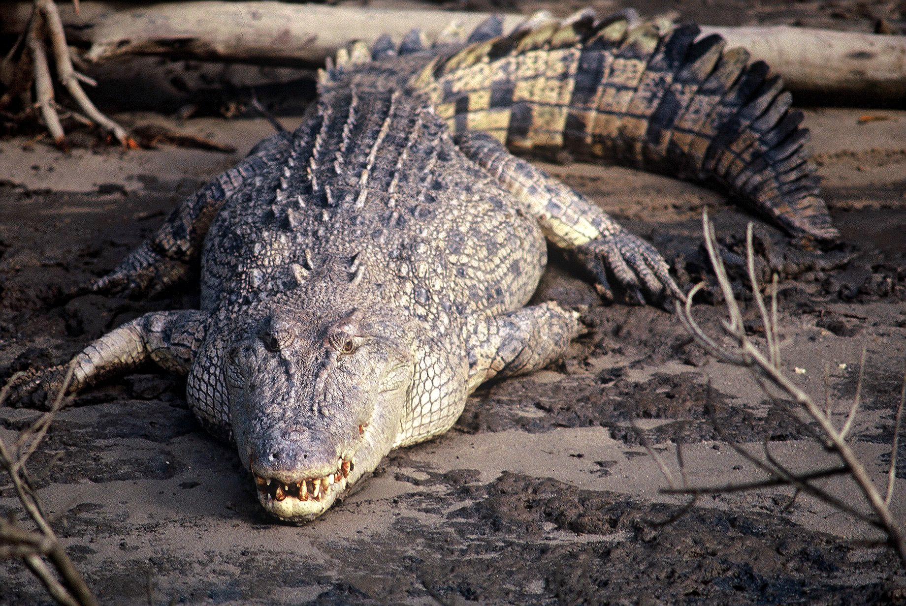 Big croc head on.JPG