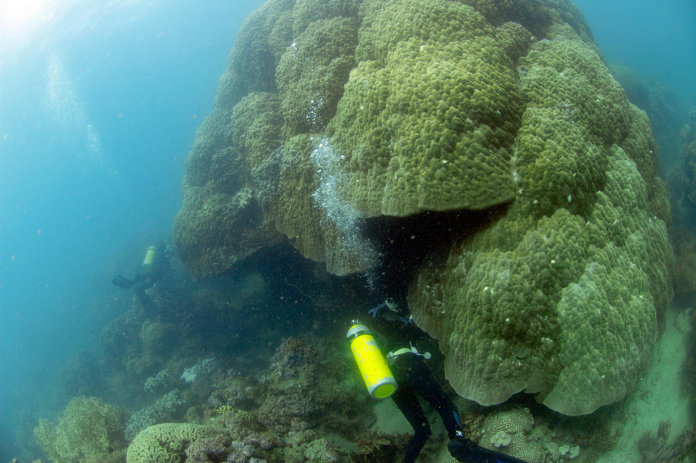 Huge Coral