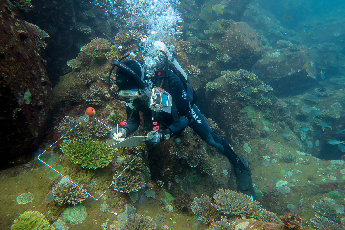 Above: Surveying coral recruitment on port breakwater at Cape Preston, Western Australia.