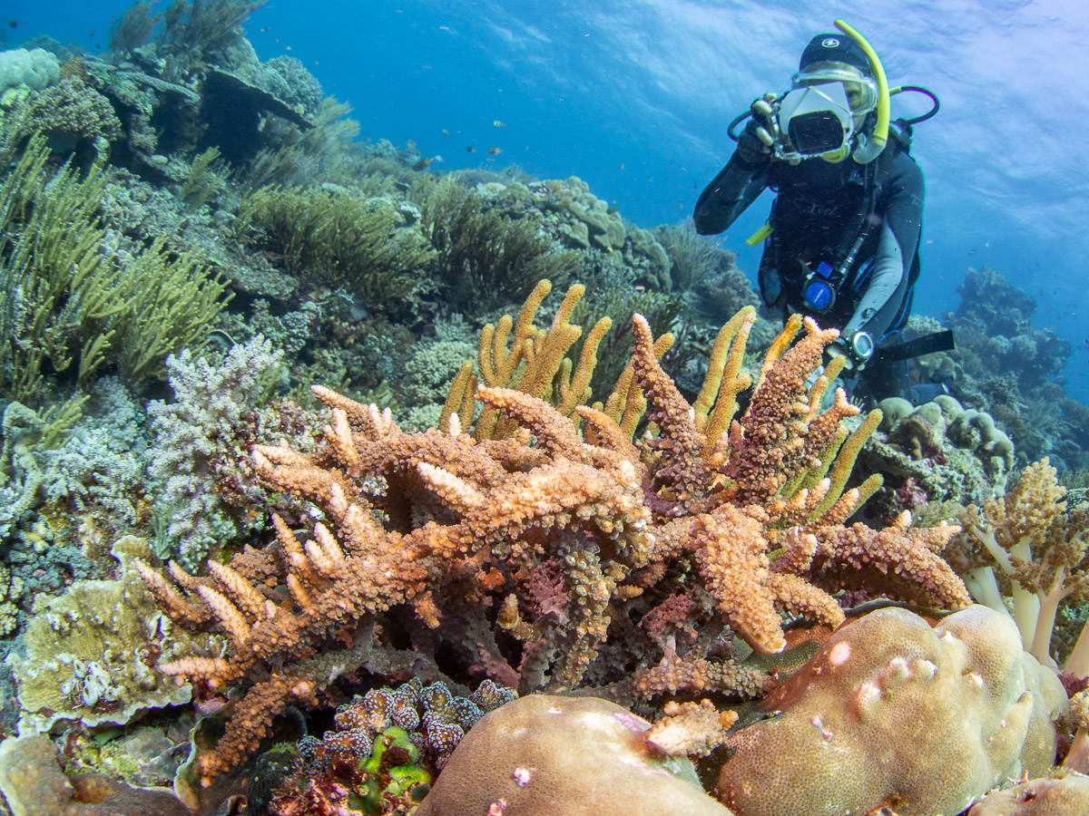 Avril photographs an unusual coral mimicking algae  Eucheuma arnoldii  on the Atauro Island reef