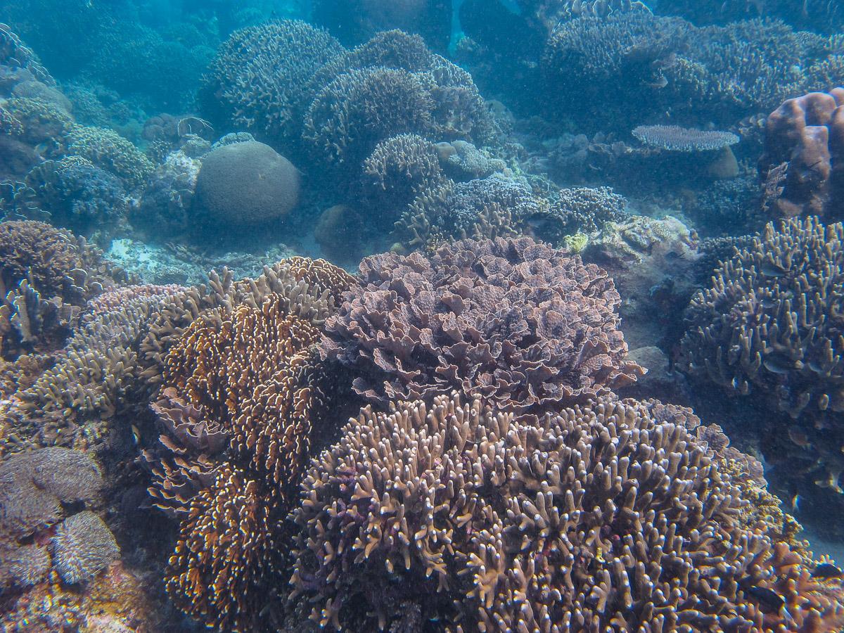 Rich coral community at Uara-ana on the north coast of Atauro Island