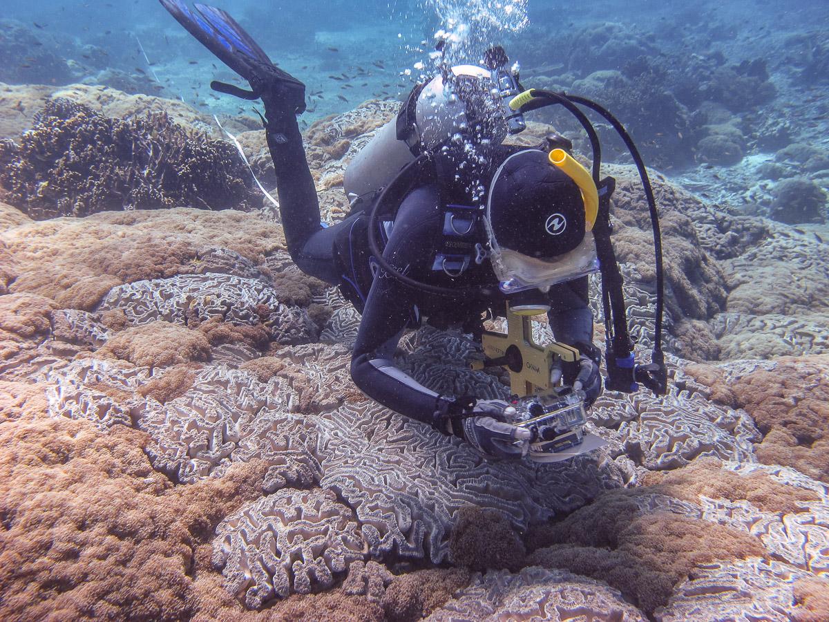 Avril checks out a huge  Euphyllia ancora  colony at Uaro-ana