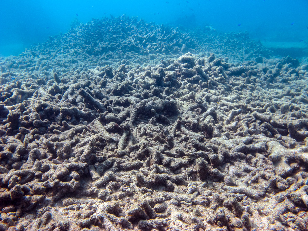 Many corals in shallow water died during the cyclone and have not recovered at all