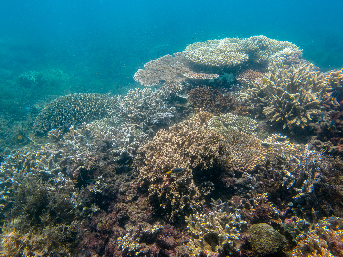 Rich patch of reef with diverse corals