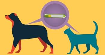microchip-dog-cat.jpg