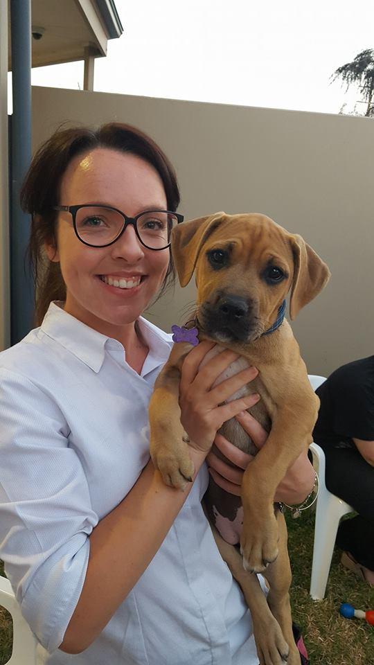 Port Adelaide Vet puppy training