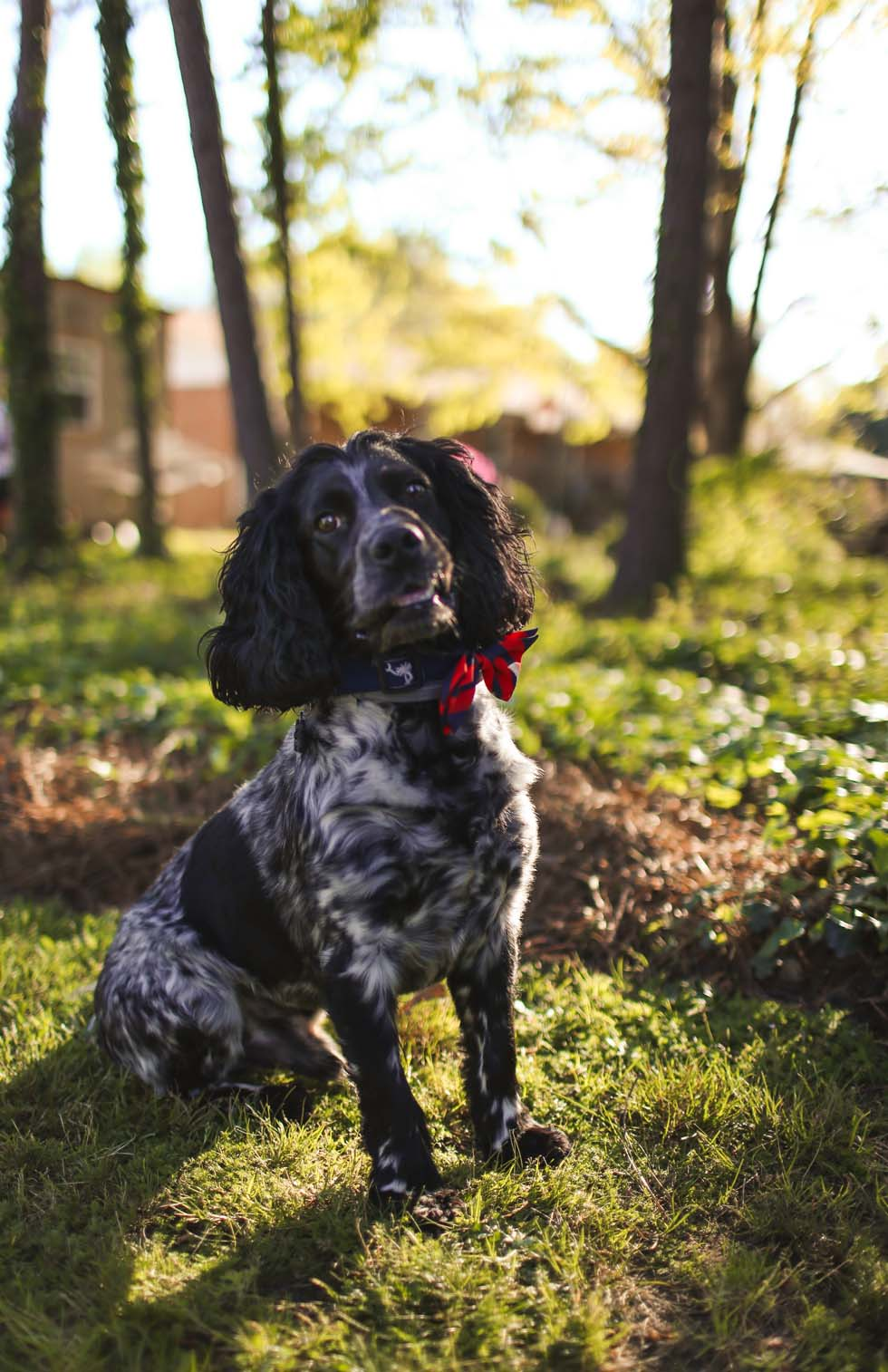 DARLING_LILLY_PHOTOGRAPHY_PUPPYLOVE-3.jpg