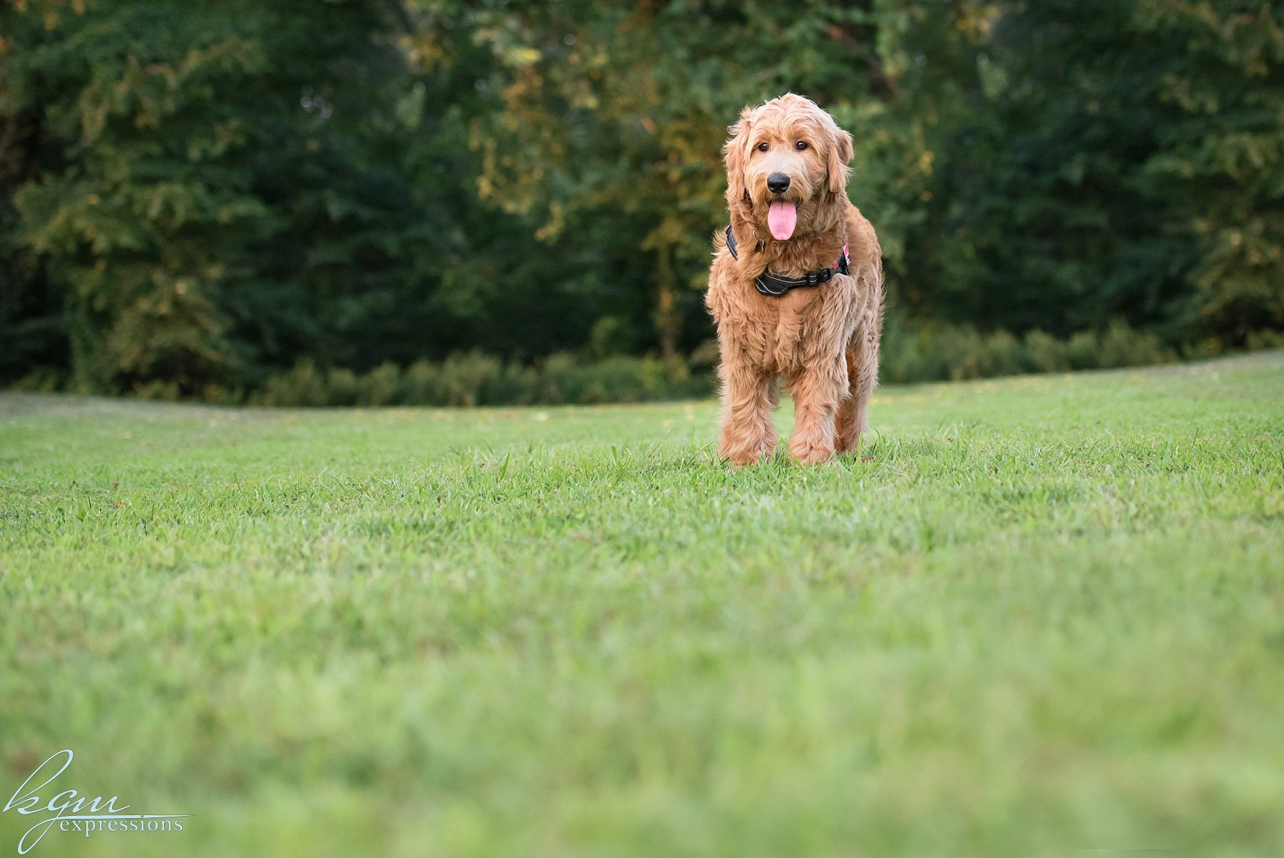 kgm expressions dog photos