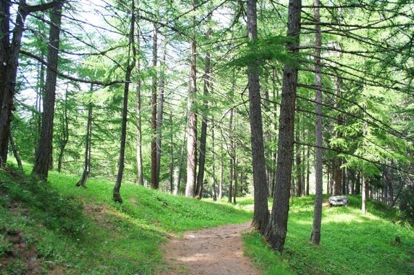 Parc naturel régional du Queyras.