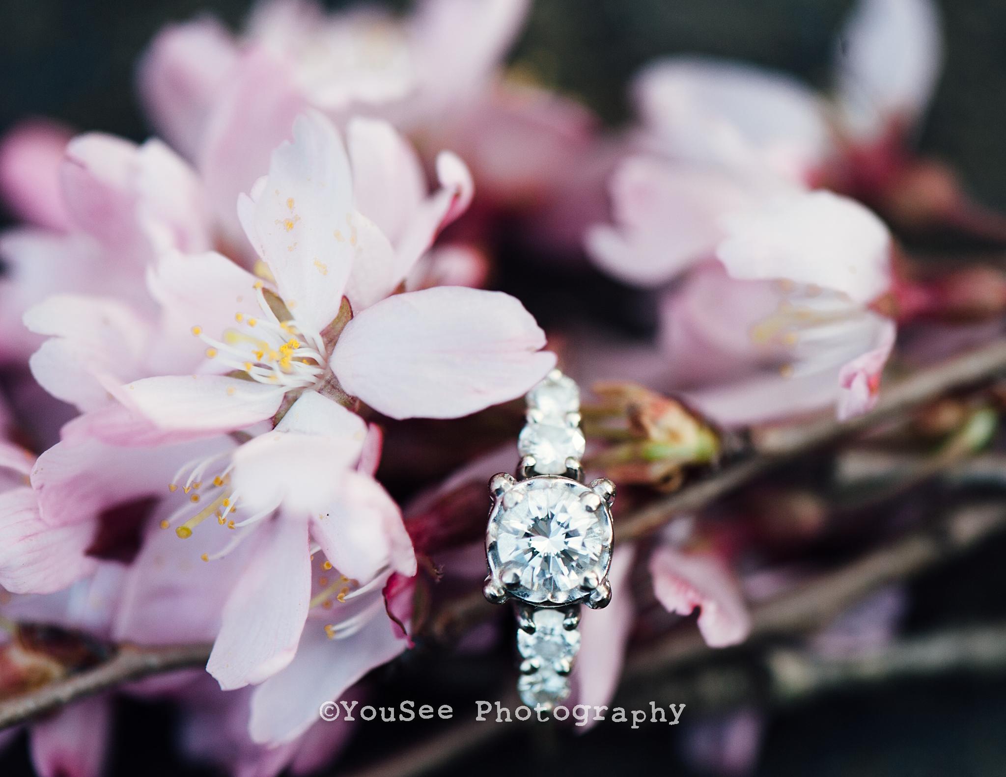 engagement_portrait_cherryblossoms_meadowlark_virginia_fredericksburgweddingphotographer_emily (18)