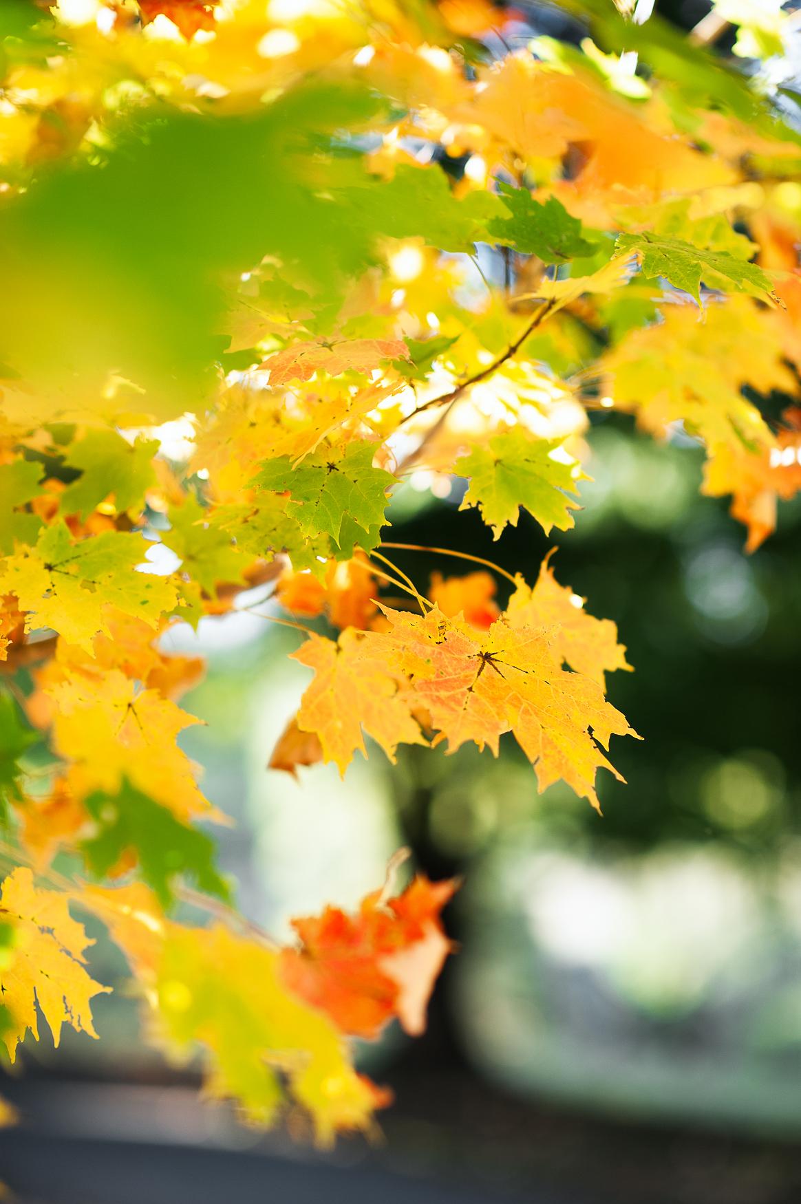 Fall_engagement_maymont_virginiawedding_youseephotography_CatherineCody (38).jpg
