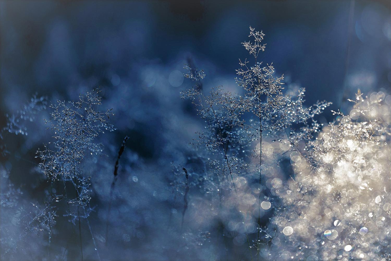 Water droplets on winter fern