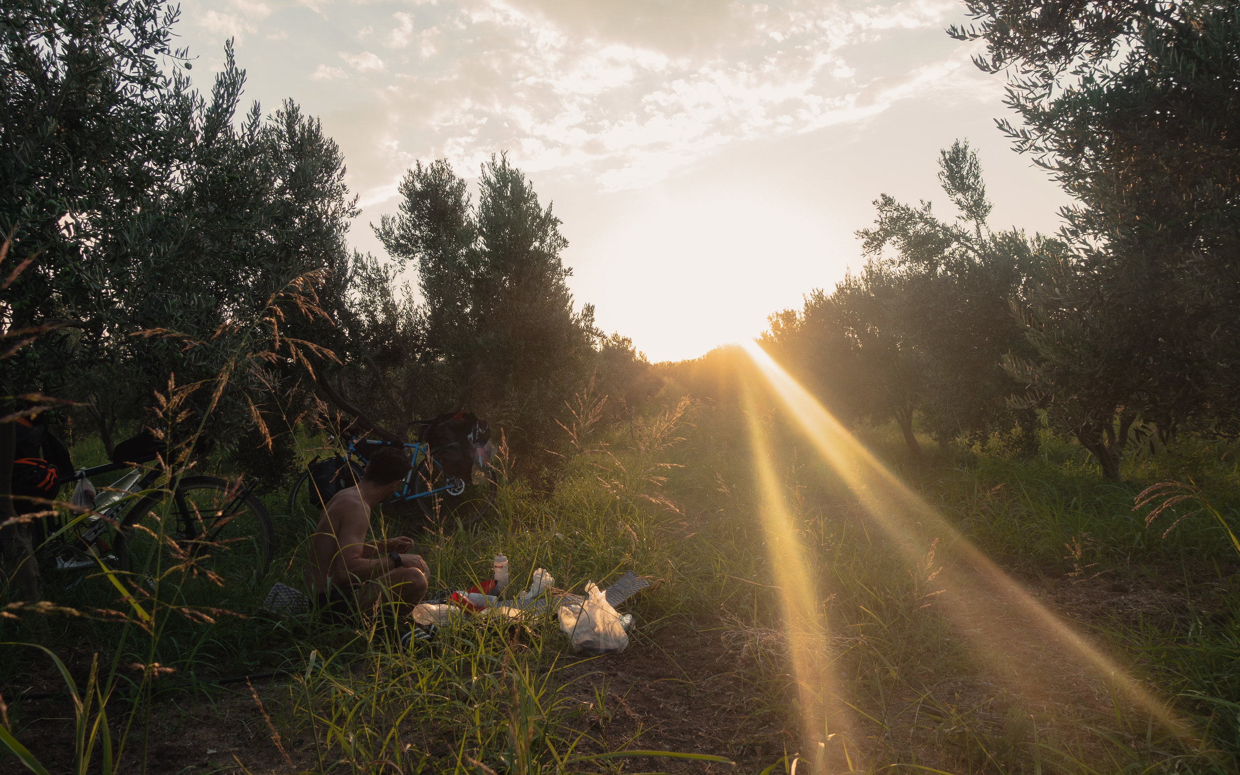 Wild camping in an olive grove
