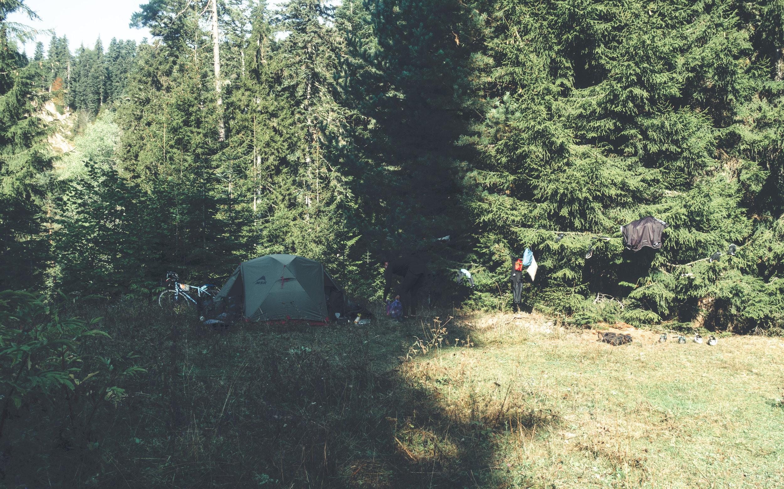 Pine forest camping