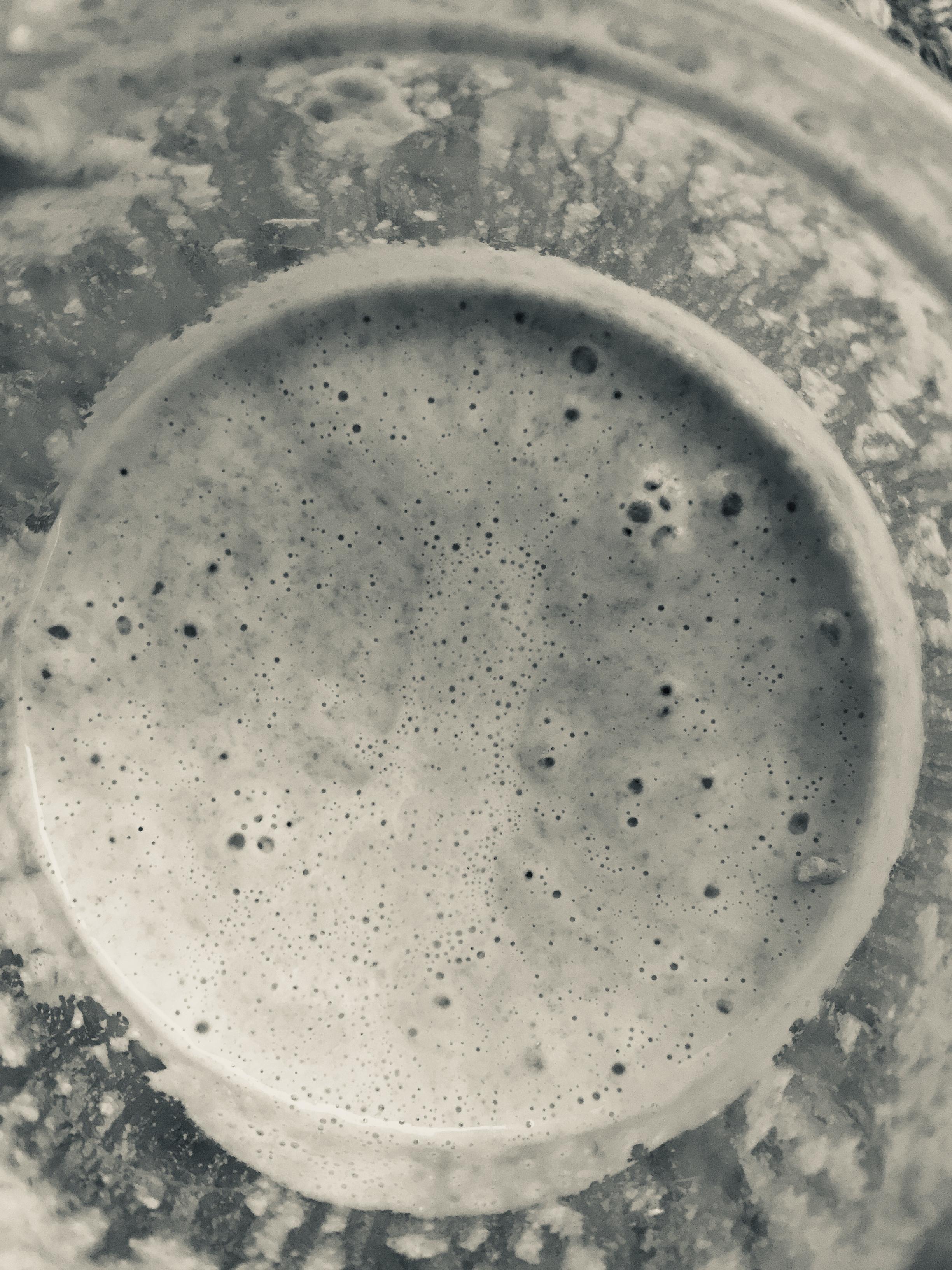 .....a love affair with Lactobacillus sanfranciscensis -