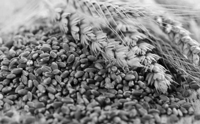 Wheat - When grain is milled it becomes flour. Flour consists of proteins (refer to by many as gluten), starch, non-starch polysaccharides, lipids and trace amounts of minerals. As soon as flour is mixed with water the natural yeast on the flour starts to work on sugars in the flour, transforming them into alcohol and carbon dioxide (which we call fermentation), which makes the dough rise.Our focus is for you to understand good bread-making techniques and why.