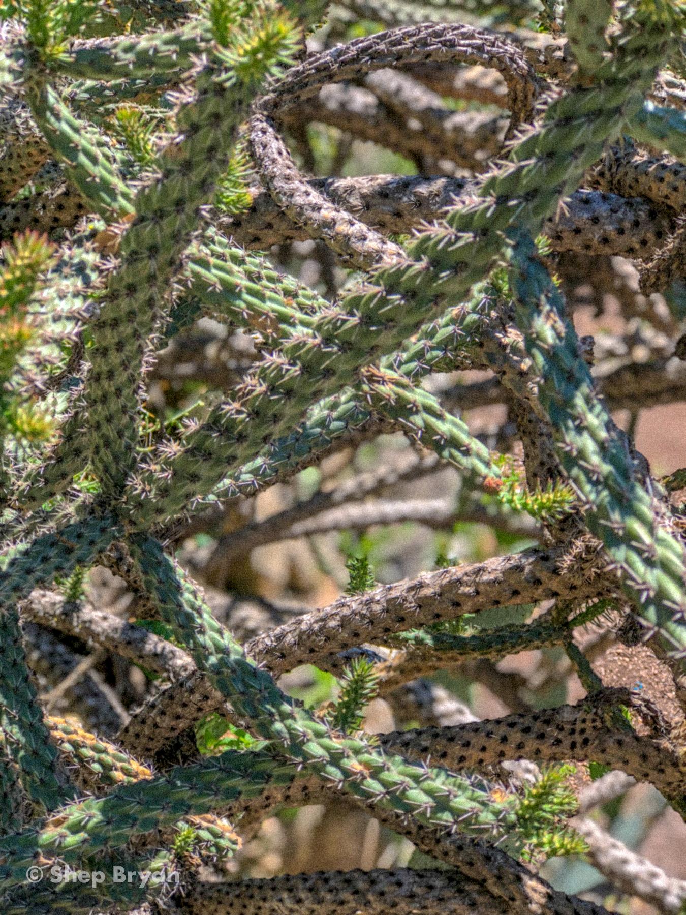 shep in austin - april-16.jpg
