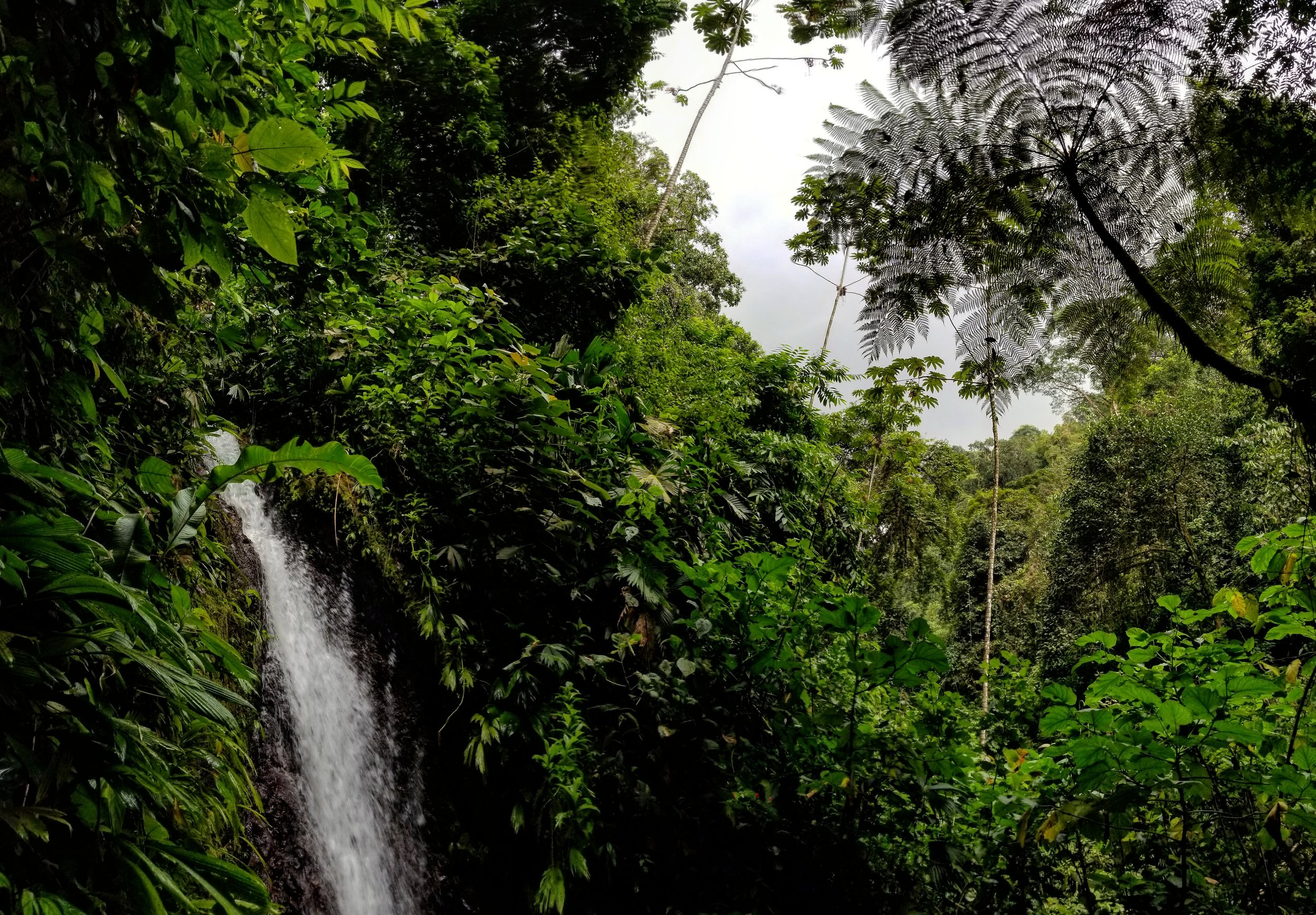 RAINMAKER - COSTA RICA