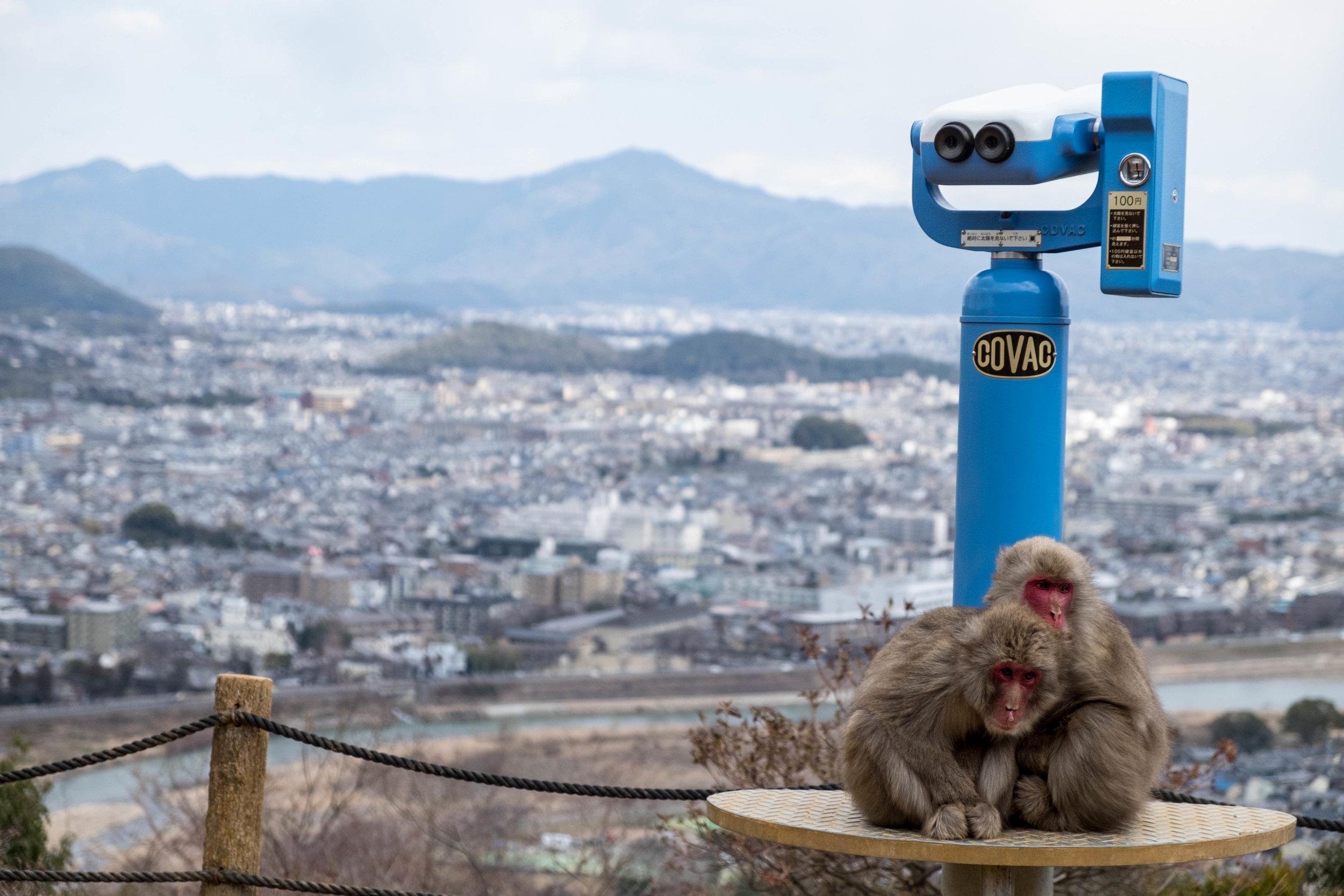 Arashiyama Monkey Park, Kyoto