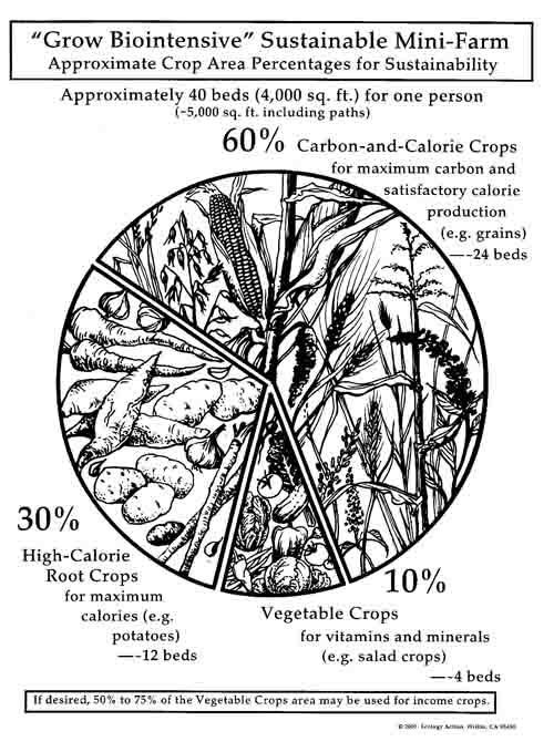 60-30-10 - GROW BIOINTENSIVE dedicates 60% of the growing area for Compost and Calorie Crops that produce a tremendous amount of dry biomass that nourishes the soil through composting, and a significant amount of calories to feed the farmer.30% of the area in special root crops that are the most efficient at producing very high amounts of calories per unit of area per unit of time, contributing most of our caloric needs for our diet.10% of the area in vegetable crops high in vitamins,minerals and amino acids that aren't present in the compost and calorie crops. Part of this 10% can be dedicated towards income producing crops. This 60-30-10 rule allows GROW BIOINTENSIVE to produce a persons diet for an entire year, in the smallest area possible, while still remaining sustainable by growing enough compost material to give back more to the soil than we take.