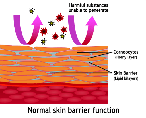 normal-skin-barrier-function.png