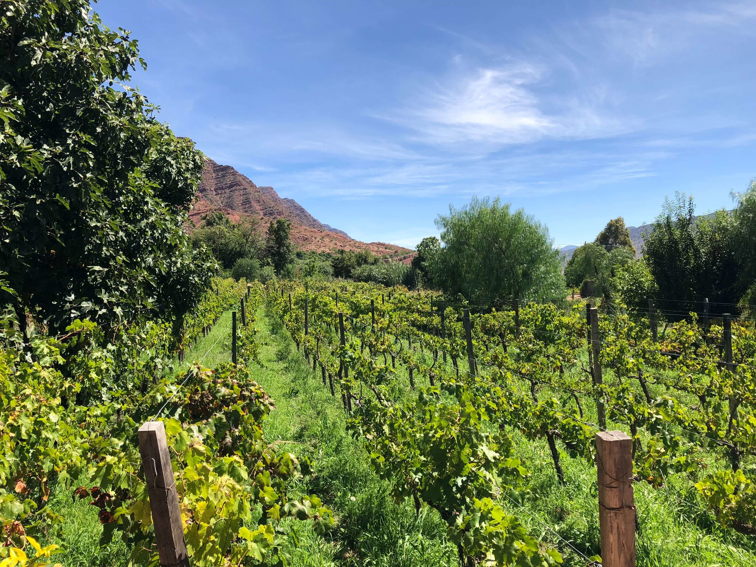 The vineyard at Bodega Cepas de Oro is located near the town of Villa Abecia in the Cinti Valley at an elevation of  2,350 meters (7,700ft). At this height the sun is filtered by less atmosphere leading to about 25% more UV exposure.