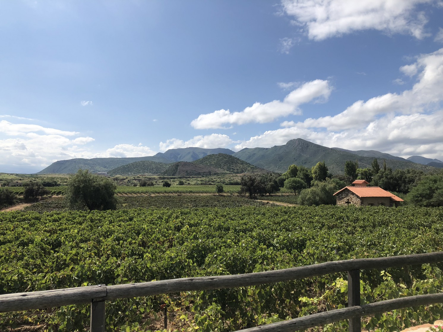 Tannat grows here at one of the vineyards of Bodega Aranjuez, located in Tarija, Bolivia. Tannat is well adapted to the high UV exposure found at 2,000 meters above sea level (6,500ft).