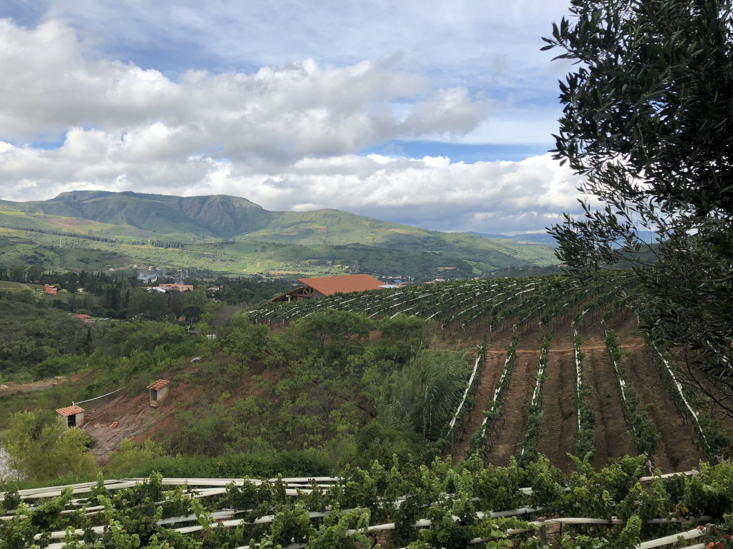 The vineyards at Bodega Uvairenda in Samaipata, Bolivia represent the elegance of high altitude wines. Cooler weather and longer hangtimes make for complex and rich wines.