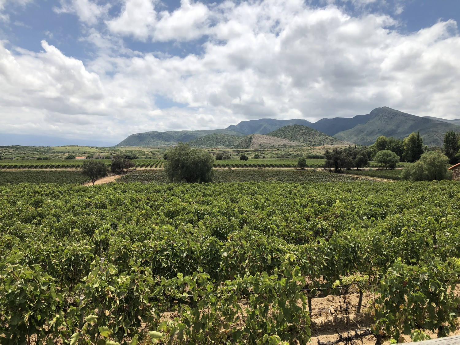 The warm, fertile valleys of Tarija produce intense Tannat that is surprisingly well balanced as it maintains high levels of acid, typical of high altitude terroir.