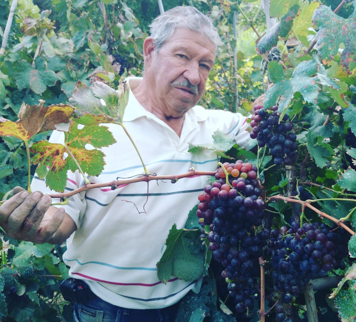 Jaime Rivera, 3rd generation winemaker at Bodega Cepa de Oro shows off his Mission Grapes early in the summer.