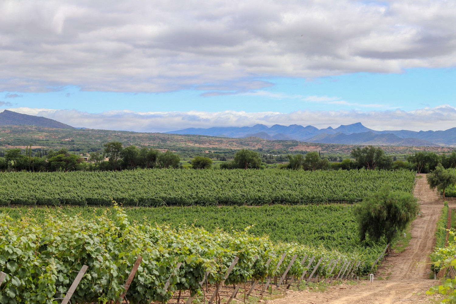 A view of the Valley of Tarija from the vineyards of Bodega Aranjuez.