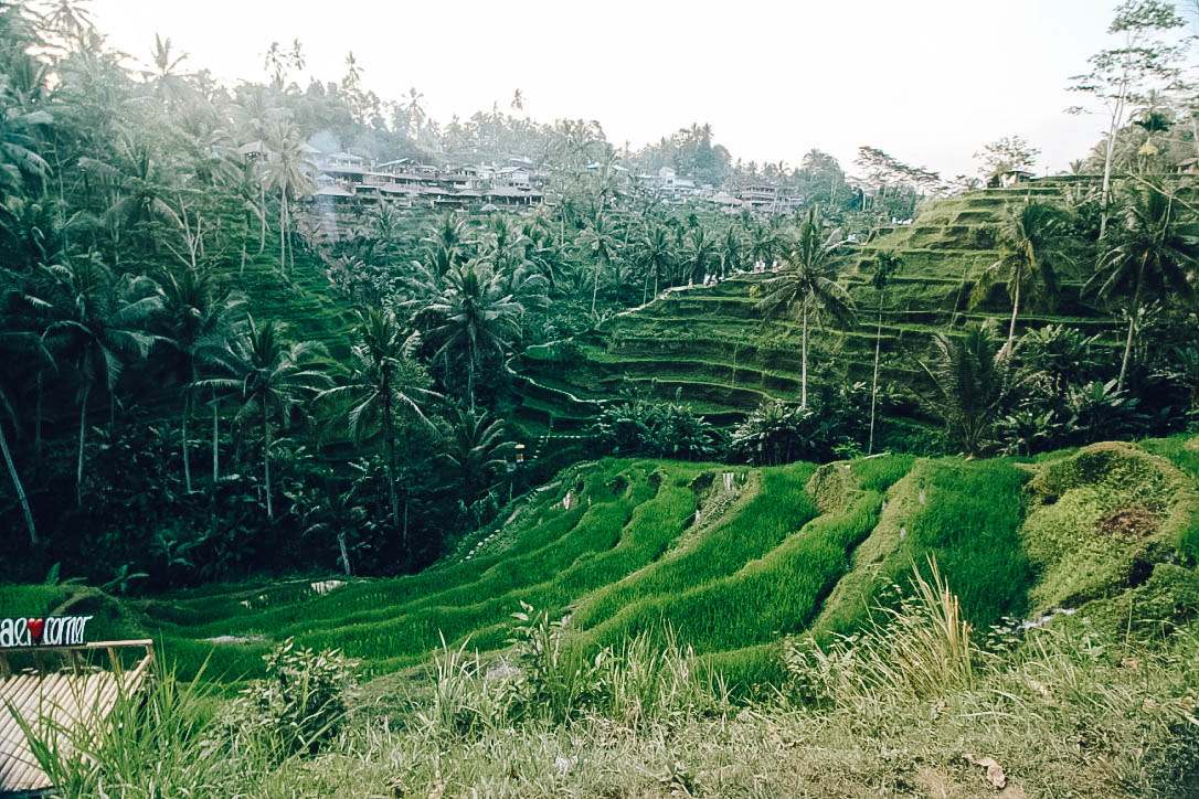 Bali- rice terrace-3.jpg