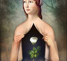 the-rose-by-christian-schloe.jpg