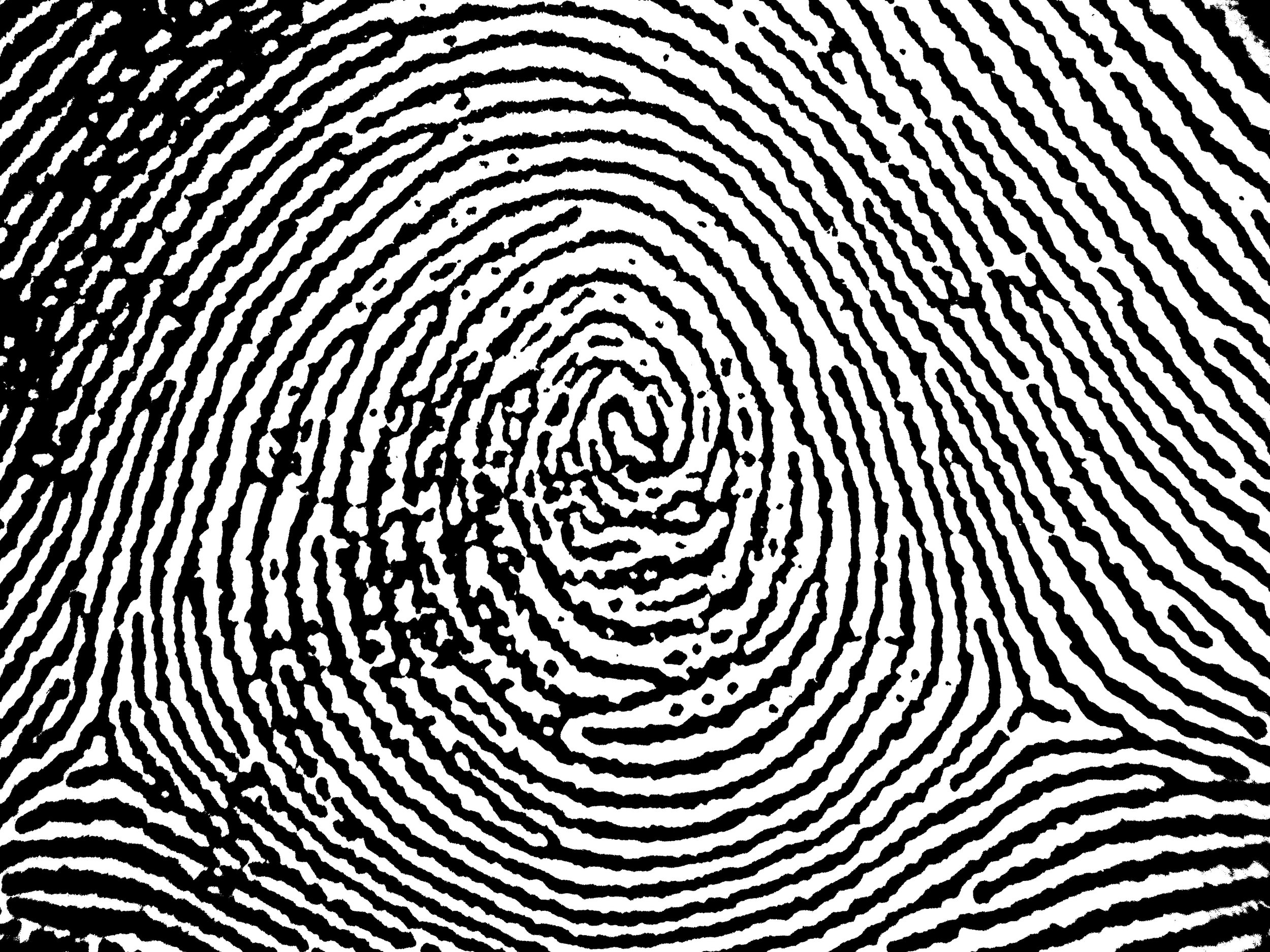 Plain_whorl_in_a_right_thumbprint.jpg
