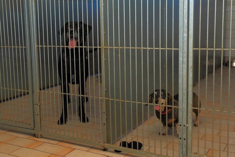 Hundepension - Kennel Roager - 2 første bokse mod indkørsel.JPG