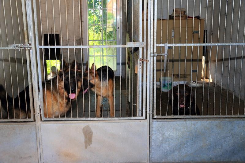 Hundepension - Kennel Roager - 2 udendørs løbegårde set indefra.JPG