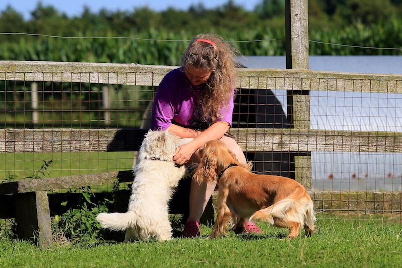 Hundepension - Kennel Roager - pensionshunde hygger med Anita ved bænken i midterstykket.JPG